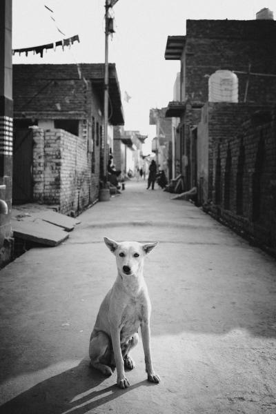 Agra Dog