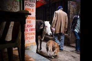 Lassi Cow