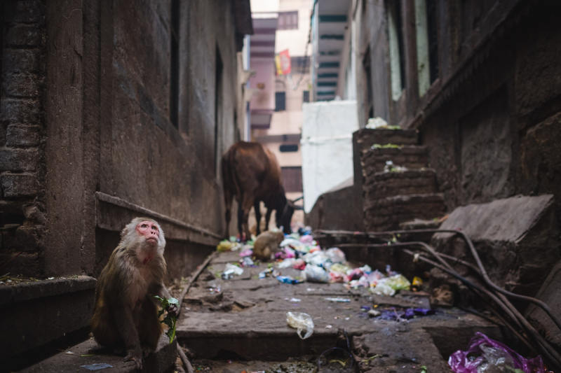 Litter Monkey
