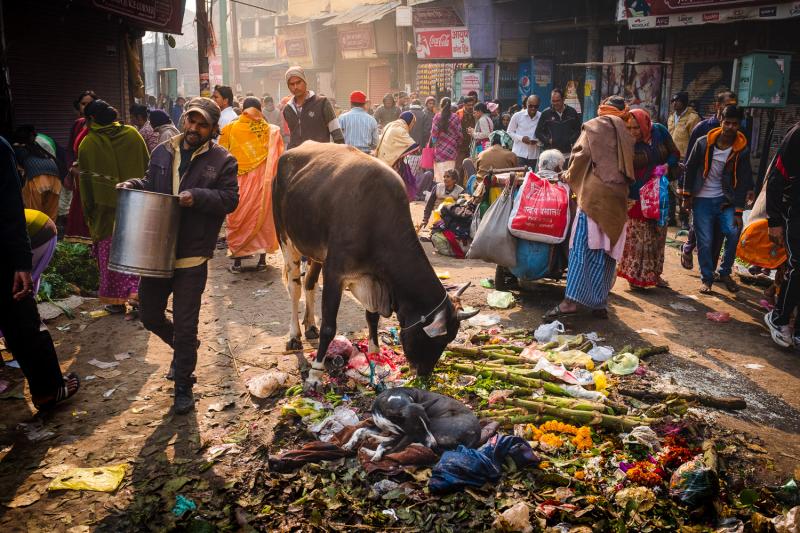 Litter Cow