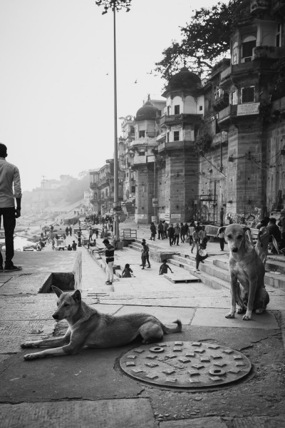Two Dogs on the Ghats
