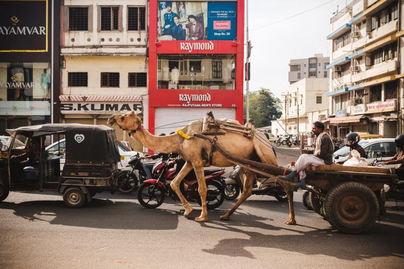 Camel-Trailer