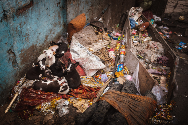 Coffin Puppies