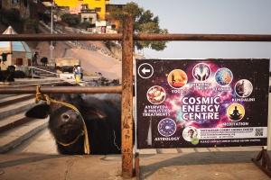 Cosmic Cow