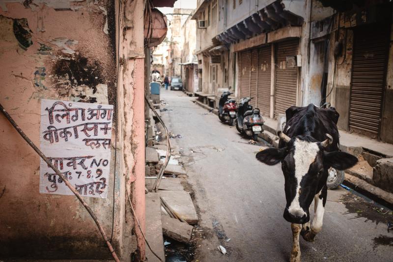 Cow-Inspector