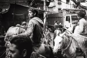 Delhi Donkeys