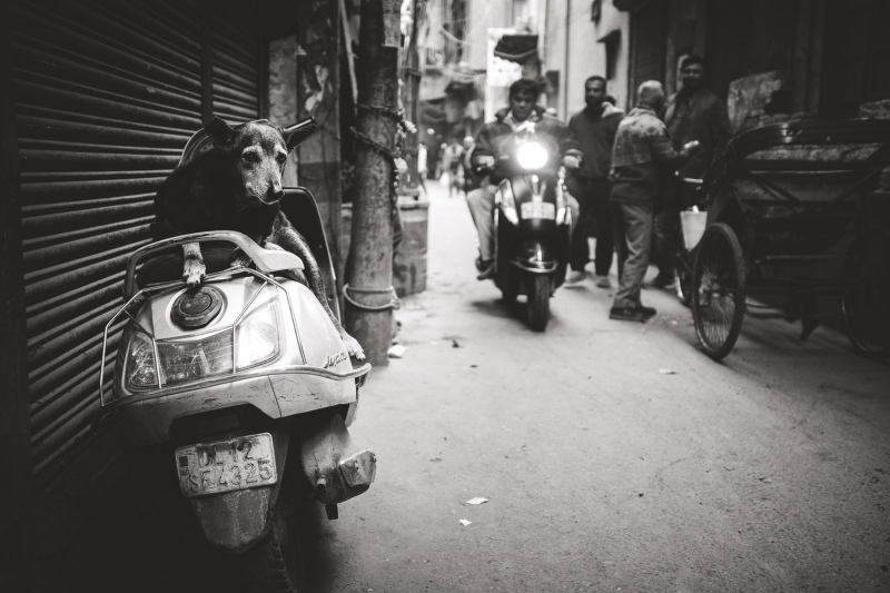Old Scooter Dog