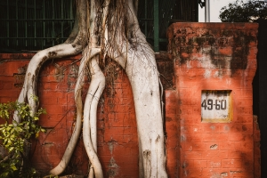 Orange Wall Banyan