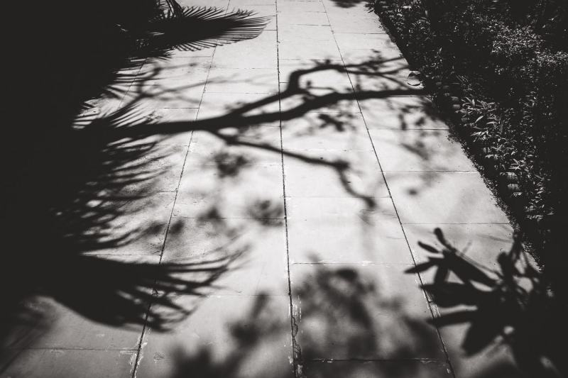 Tropical-Shadows