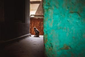 Turquoise Monkey