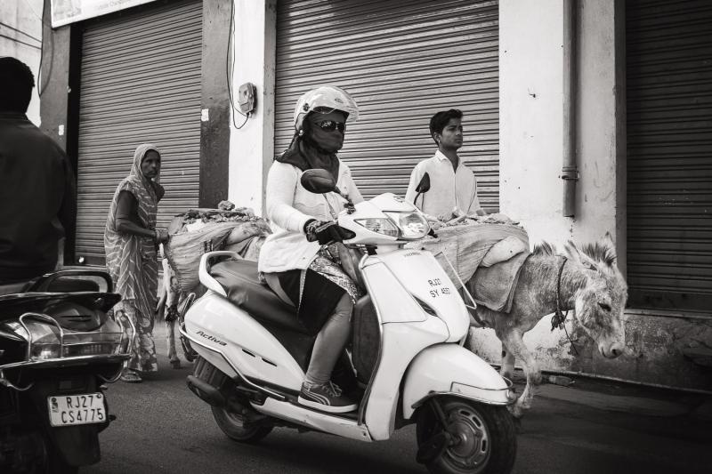 White-Scooter-Donkey