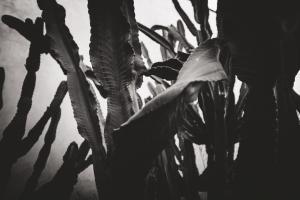 Jardin Secret Cactus