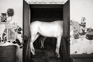 Headless-Horse