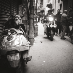 Old-Scooter-Dog