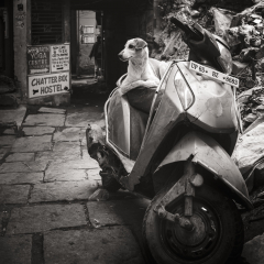 Scooter-Dog