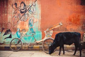 Shivas-Bicycle