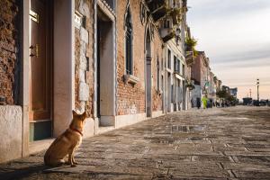 Venice Dog 2