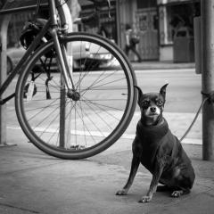 Mini Dog